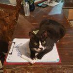 Katze Oreo auf Pulau Kapas