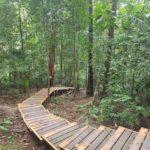 Weg durch den Taman Negara
